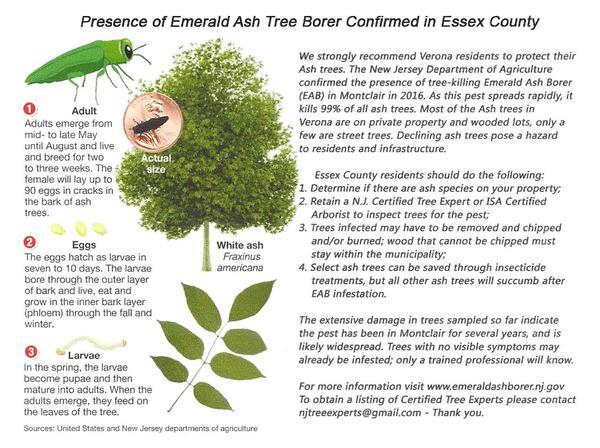 EAB Fact Sheet.jpg